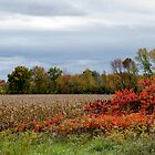 Fall Day In An Ontario Corn Field by Shane Laing