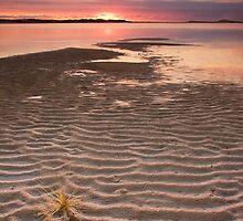 Tumbleweed on the Snowy River Estuary by Alex Fricke
