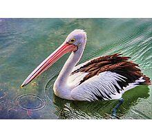 Pelican circle Photographic Print