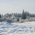 Winter 2013 /2 by Antanas