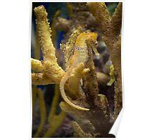 Mimic Seahorse Poster
