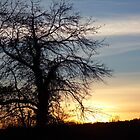 Sunset Tree by weegoodie