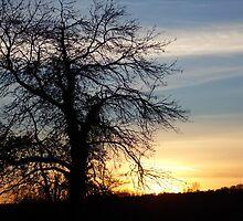Sunset Tree by weegoodie