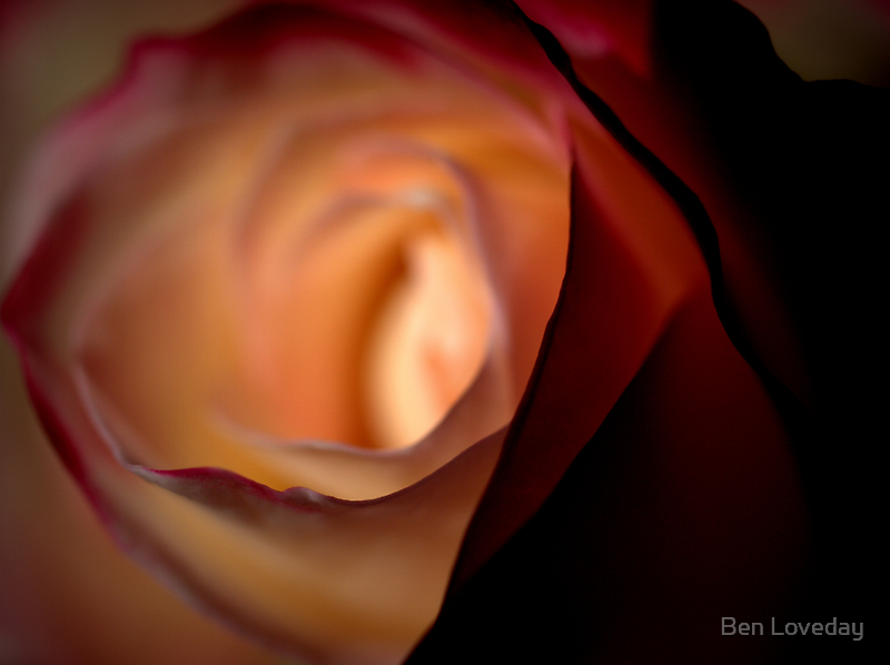 The Name of the Rose by Ben Loveday