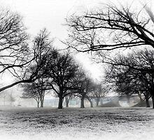 """""""Foggy Skate Park"""" by Husky"""