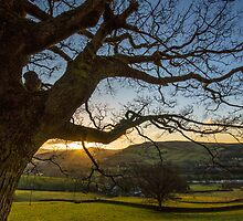 Out Stretched Tree by Phil Tinkler