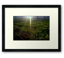 Framed Sun in Green Framed Print