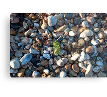 See weed Pebbly Seaweed Metal Print