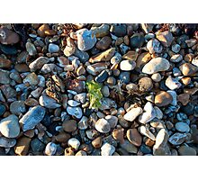 See weed Pebbly Seaweed Photographic Print