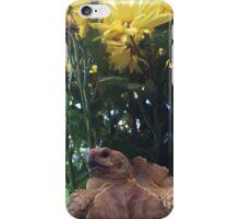 Sulfata Tortoise  iPhone Case/Skin