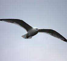 Seagull 2 by Daniel Owens