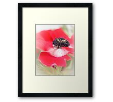 Red Anemone....(III) Framed Print