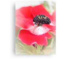 Red Anemone....(III) Canvas Print