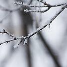 Crisp Winter by Tracy Jansen