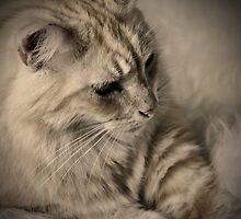 Bluey  in   sepia by Jane  mcainsh