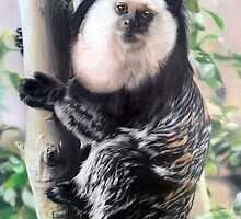 Geoffroys Tufted-ear Marmoset by Samantha Norbury