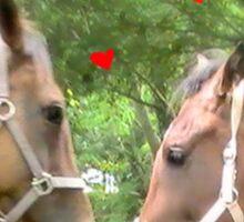 HORSE CODE  Sticker