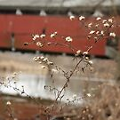 Schlichler's Covered Bridge by Jessica Petrohoy
