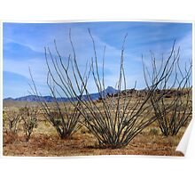Winter Ocotillo Garden Poster