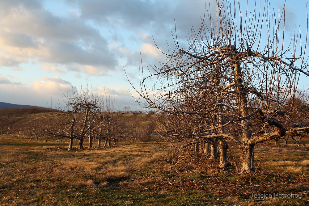 Orchard by Jessica Petrohoy