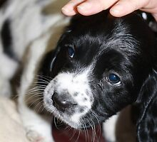 "This is ""Bex"" aged 7 weeks by Paul Morris"