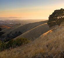 California East Bay Hills in Summer by Matt Tilghman