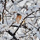 Just a little early for spring! by Guy Jenkins