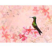 Primavera Rosa Photographic Print