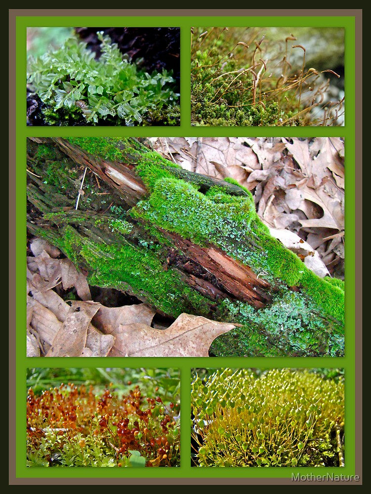Woodland Mosses by MotherNature