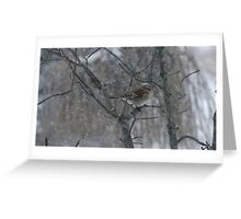 Song Sparrow Eating Seeds In The Falling Snow Greeting Card