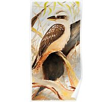 kookabura by three Poster