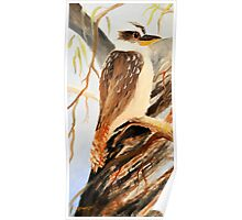 kookaburra one of tryptage set Poster