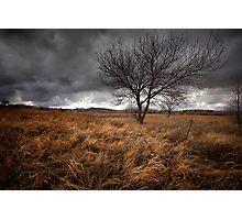 Winters Brew Photographic Print