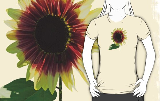 Sunflower Ring of Fire by Susan Savad