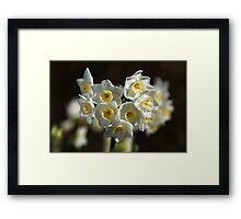 Jonquils White and Yellow Framed Print