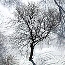 Winter tree snow shadows by Alberto  DeJesus