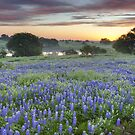 Bluebonnet Field Sunset in the Texas Hill Country by RobGreebonPhoto