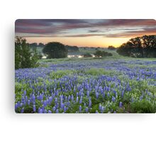 Bluebonnet Field Sunset in the Texas Hill Country Canvas Print