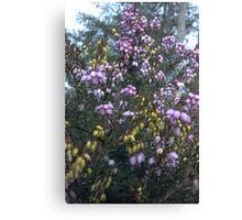 Lavender Grounds Canvas Print