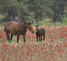 Horses in a field of Wildflowers in the Texas Hill Country by RobGreebonPhoto
