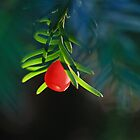 Yew Berry by Hannah Welbourn