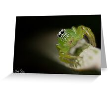 (Mopsus mormon female) Jumping Spider Greeting Card