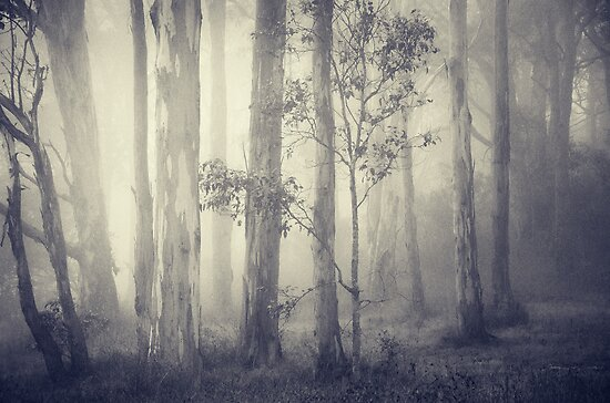 Dark forest 3 by ozzzywoman