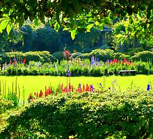 A Summer Garden in Ireland by Fara