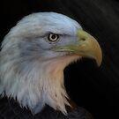 Regal Eagle by vigor