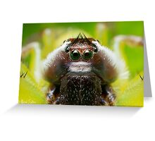 (Mopsus mormon male) Jumping Spider #2 Greeting Card