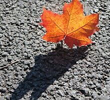 autumn shadow by hayandy