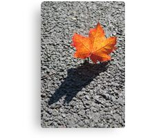 autumn shadow Canvas Print