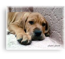 heart melter Canvas Print