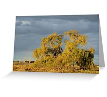 Storm Clouds in the evening sunlight Greeting Card